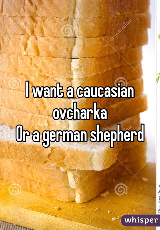 I want a caucasian ovcharka  Or a german shepherd