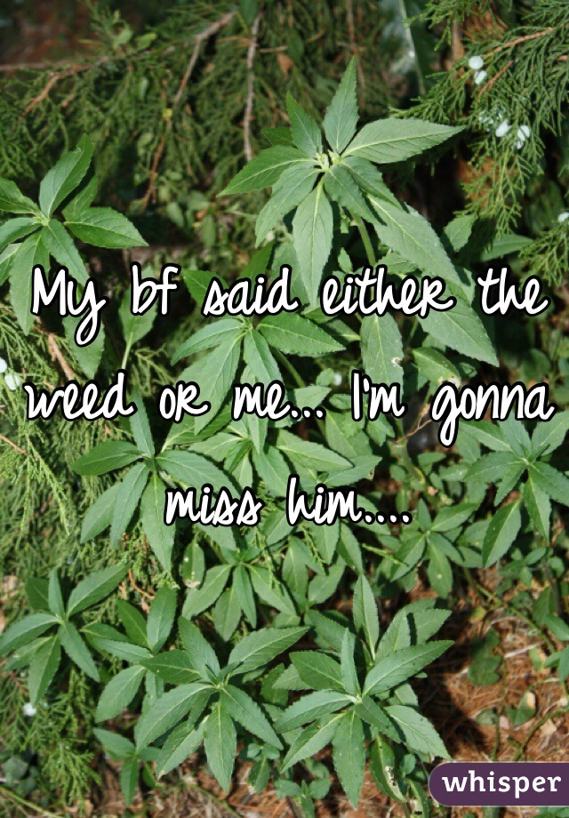 My bf said either the weed or me... I'm gonna miss him....