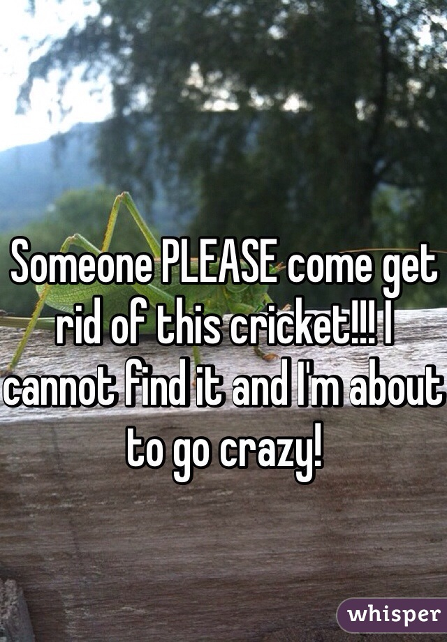 Someone PLEASE come get rid of this cricket!!! I cannot find it and I'm about to go crazy!
