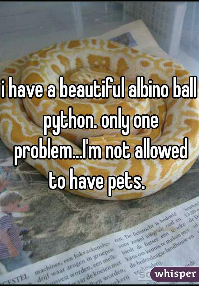 i have a beautiful albino ball python. only one problem...I'm not allowed to have pets.