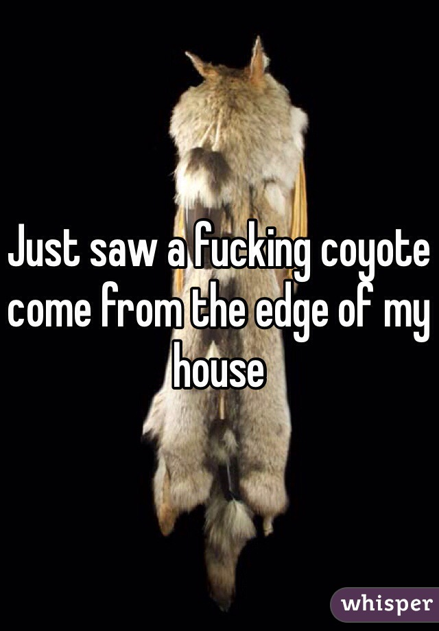 Just saw a fucking coyote come from the edge of my house