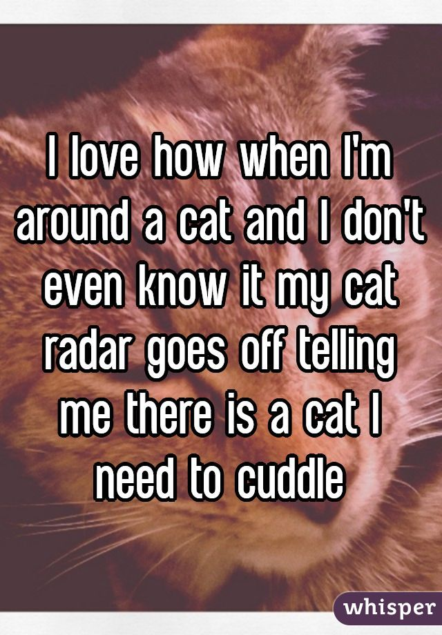I love how when I'm around a cat and I don't even know it my cat radar goes off telling me there is a cat I need to cuddle