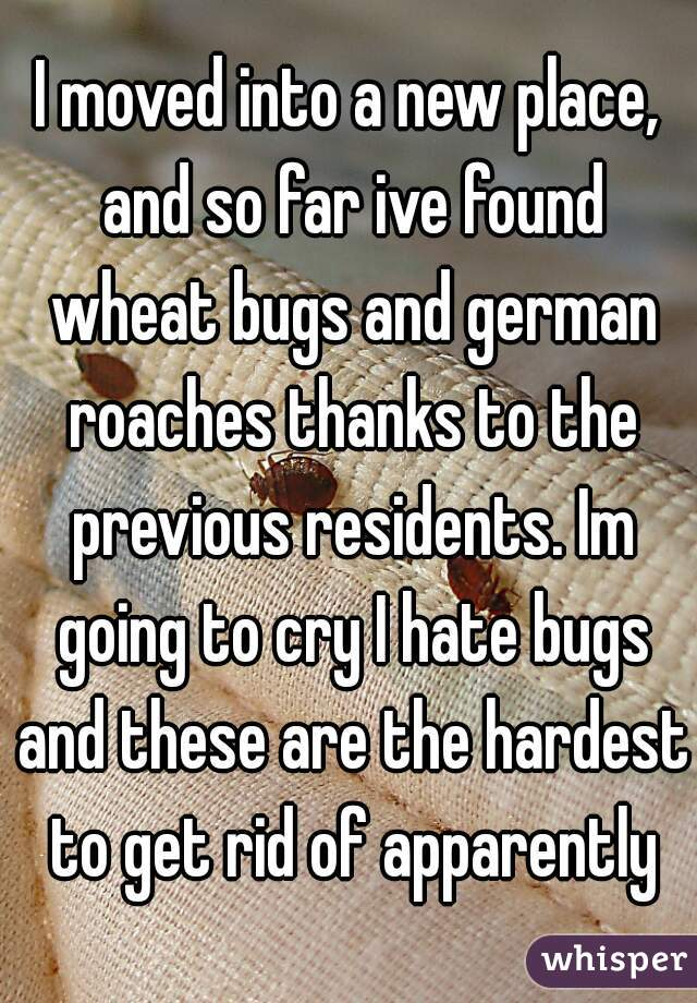 I moved into a new place, and so far ive found wheat bugs and german roaches thanks to the previous residents. Im going to cry I hate bugs and these are the hardest to get rid of apparently