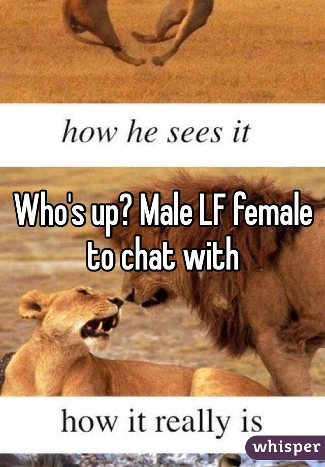 Who's up? Male LF female to chat with
