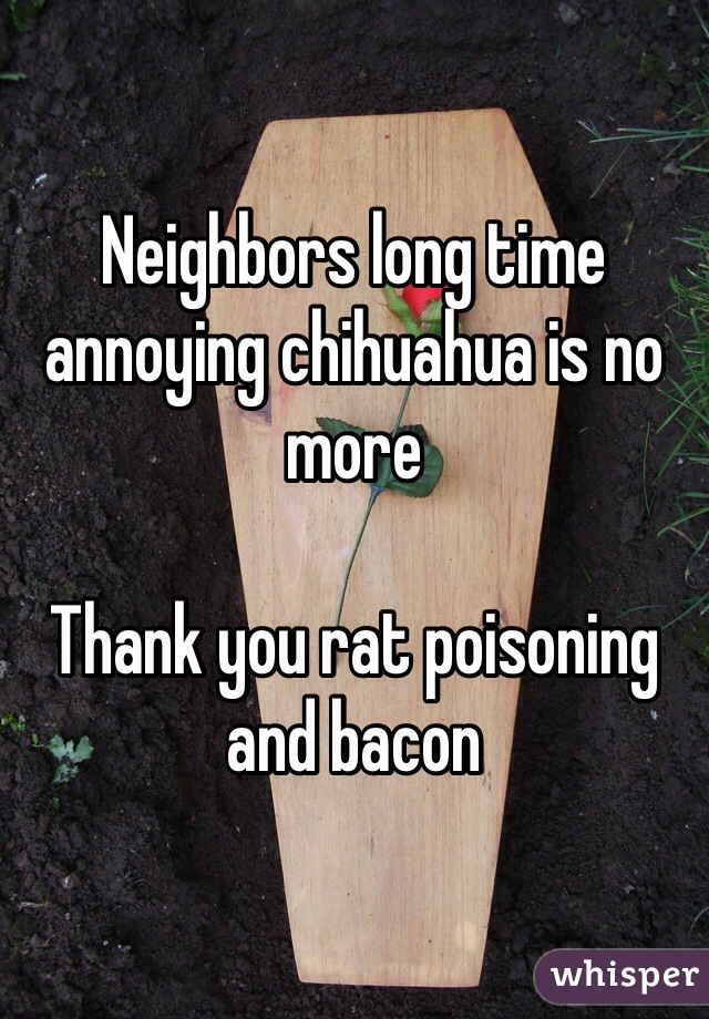 Neighbors long time annoying chihuahua is no more  Thank you rat poisoning and bacon