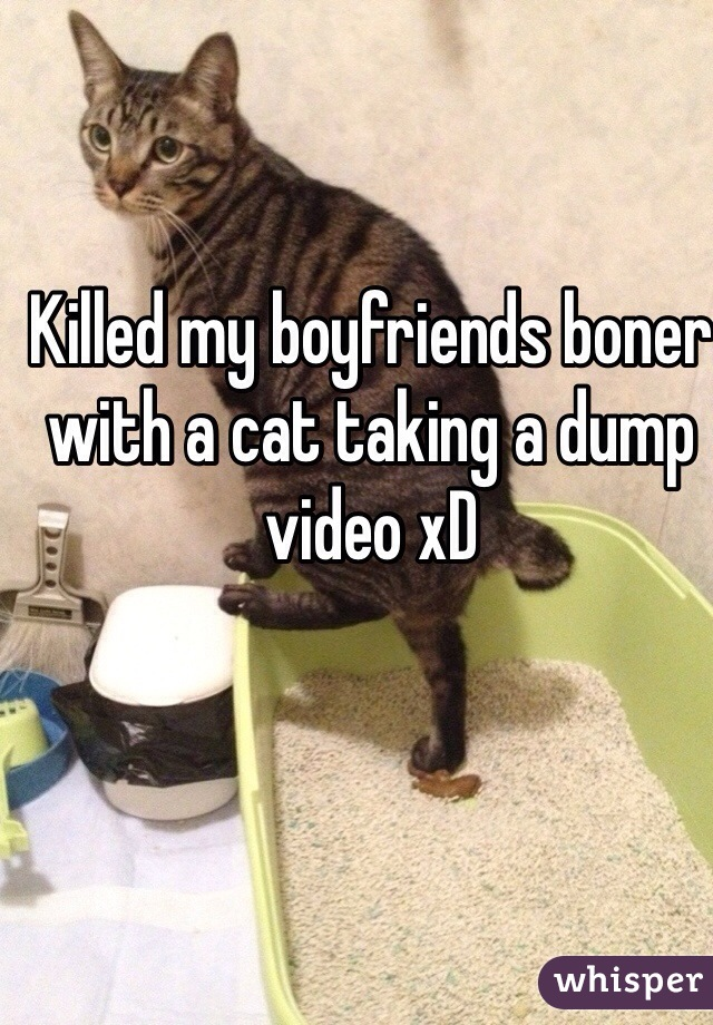 Killed my boyfriends boner with a cat taking a dump video xD