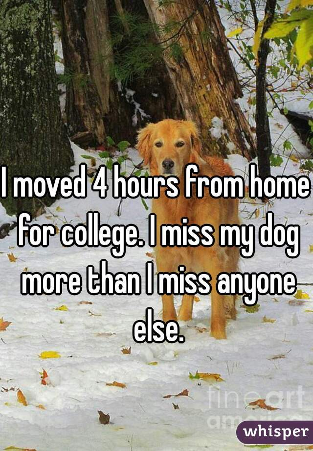 I moved 4 hours from home for college. I miss my dog more than I miss anyone else.