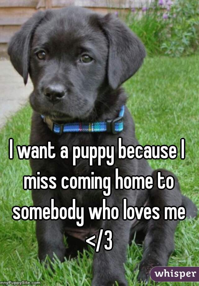 I want a puppy because I miss coming home to somebody who loves me </3