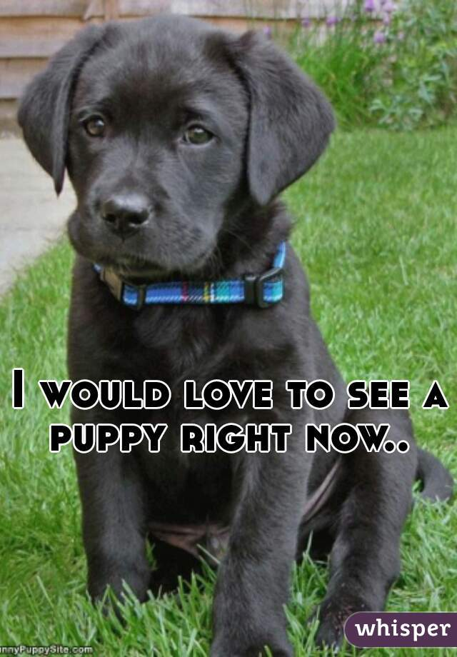 I would love to see a puppy right now..