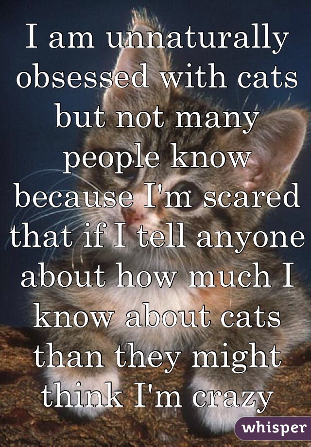 I am unnaturally obsessed with cats but not many people know because I'm scared that if I tell anyone about how much I know about cats than they might think I'm crazy