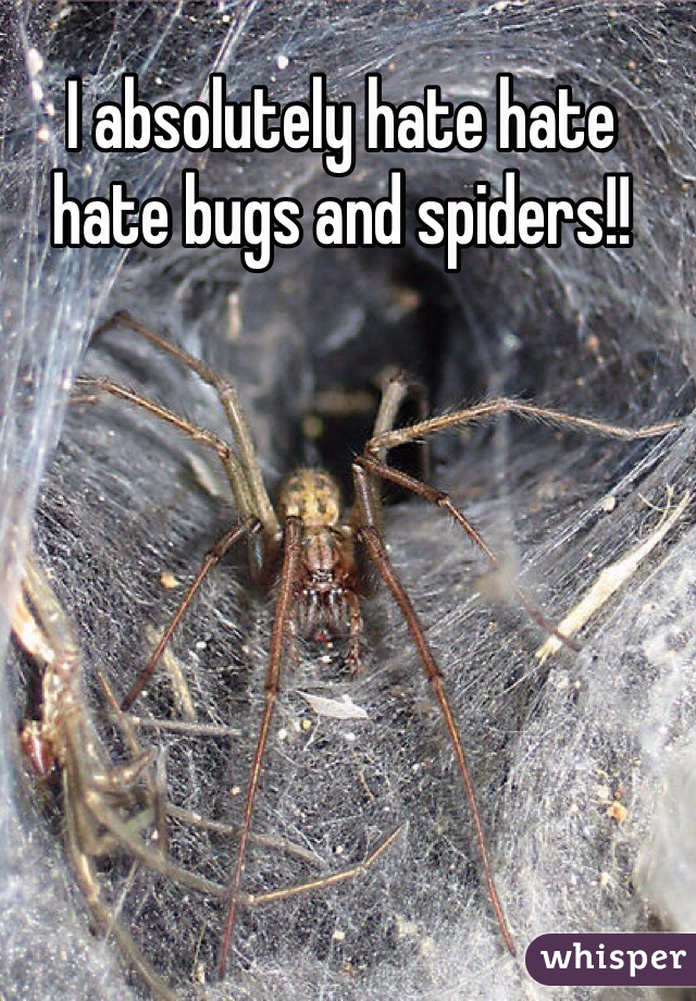 I absolutely hate hate hate bugs and spiders!!
