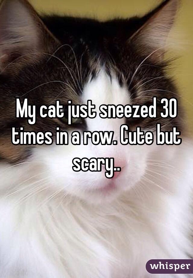 My cat just sneezed 30 times in a row. Cute but scary..