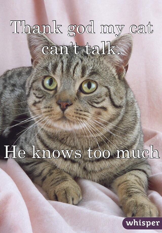 Thank god my cat can't talk.     He knows too much