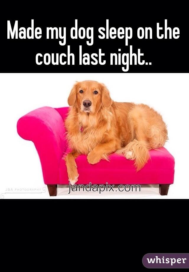 Made my dog sleep on the couch last night..