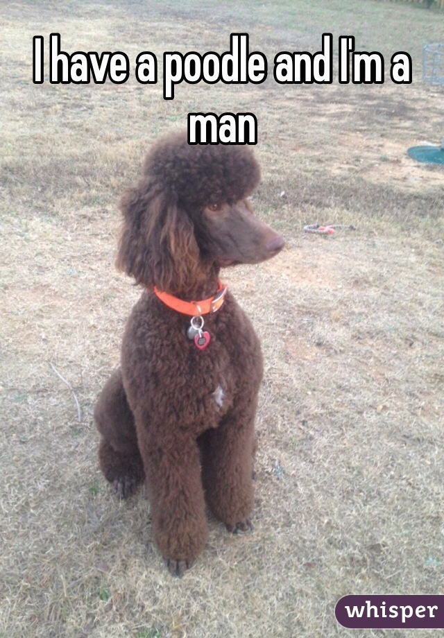 I have a poodle and I'm a man