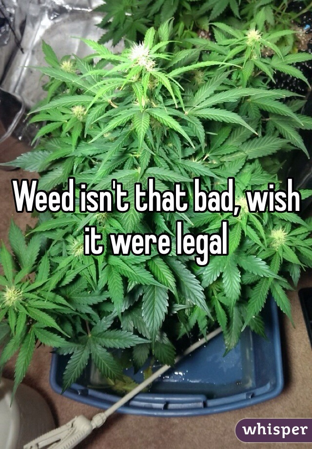 Weed isn't that bad, wish it were legal