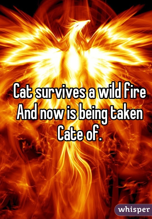 Cat survives a wild fire And now is being taken  Cate of.