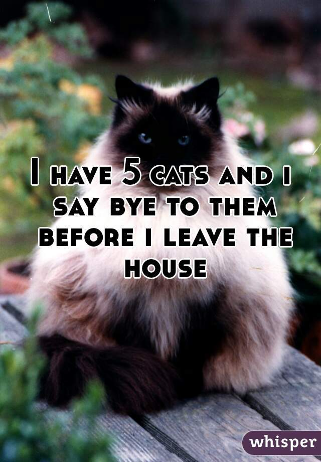 I have 5 cats and i say bye to them before i leave the house