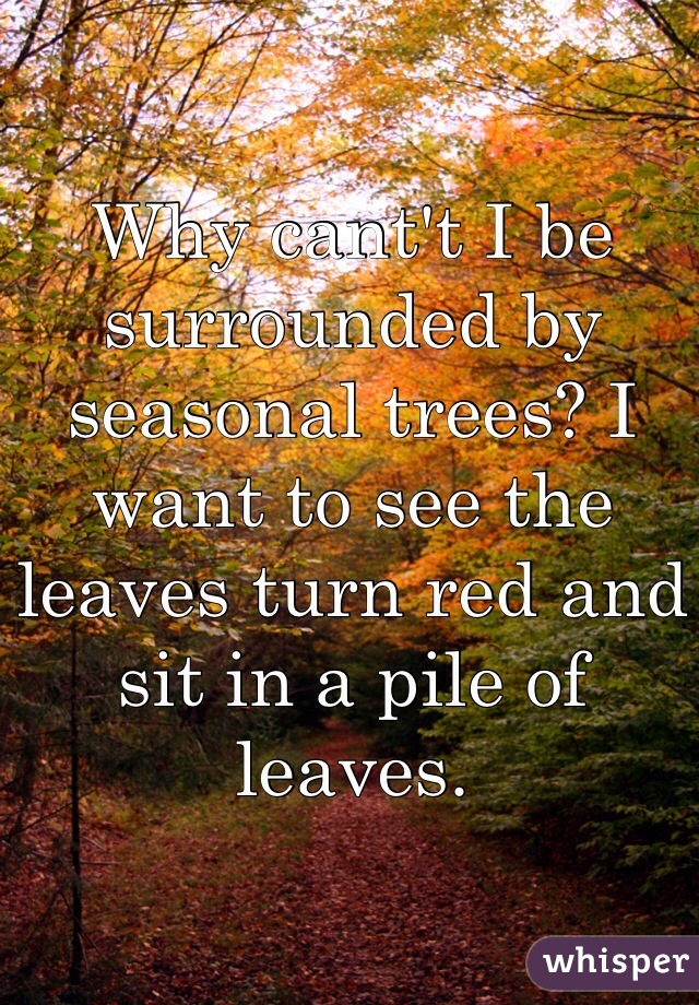 Why cant't I be surrounded by seasonal trees? I want to see the leaves turn red and sit in a pile of leaves.