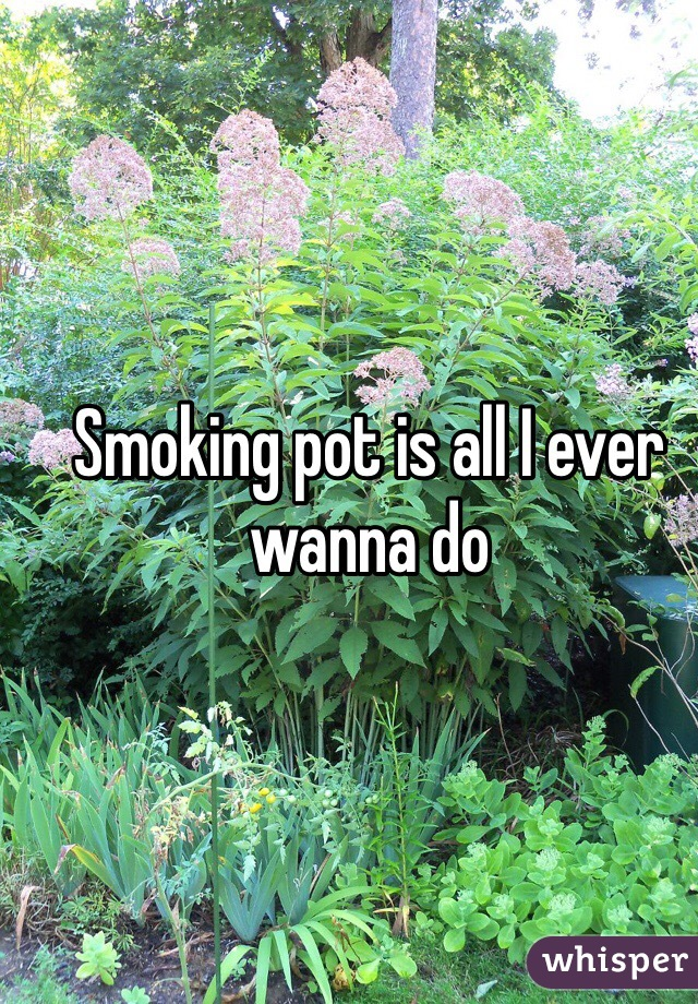 Smoking pot is all I ever wanna do