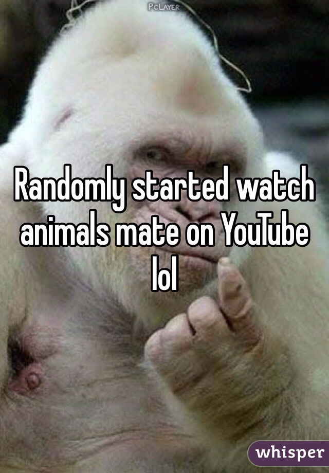 Randomly started watch animals mate on YouTube lol