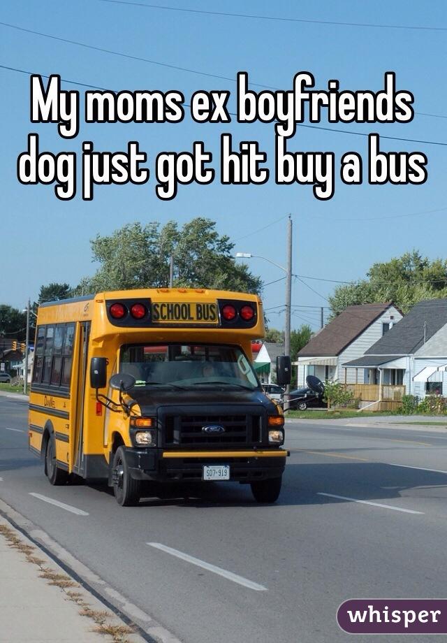 My moms ex boyfriends dog just got hit buy a bus
