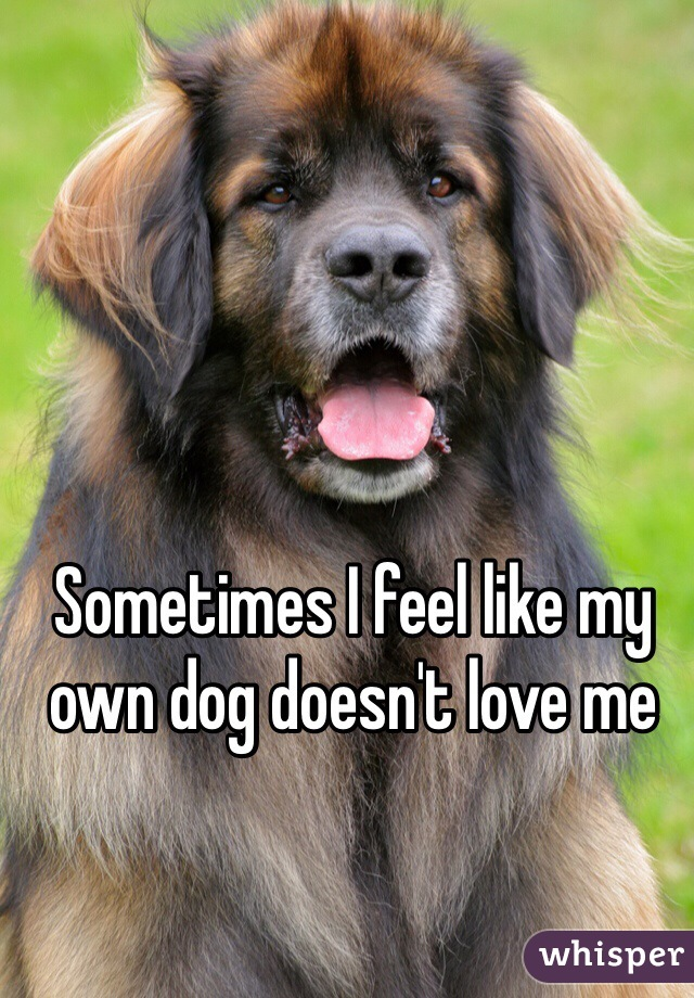 Sometimes I feel like my own dog doesn't love me