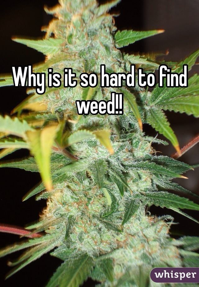 Why is it so hard to find weed!!