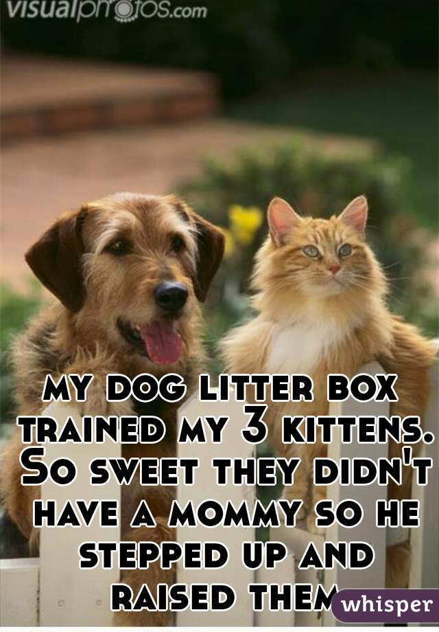 my dog litter box trained my 3 kittens. So sweet they didn't have a mommy so he stepped up and raised them