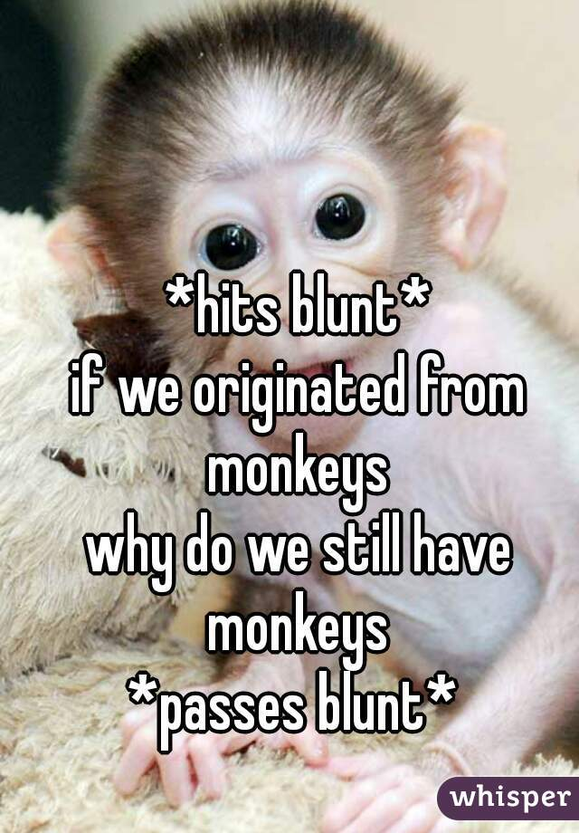 *hits blunt* if we originated from monkeys  why do we still have monkeys  *passes blunt*