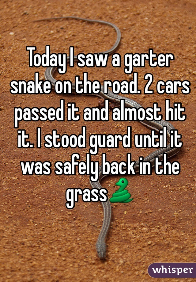 Today I saw a garter snake on the road. 2 cars passed it and almost hit it. I stood guard until it was safely back in the grass🐍