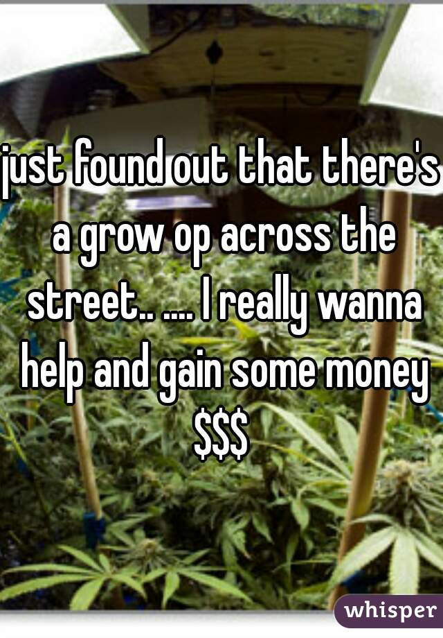 just found out that there's a grow op across the street.. .... I really wanna help and gain some money $$$