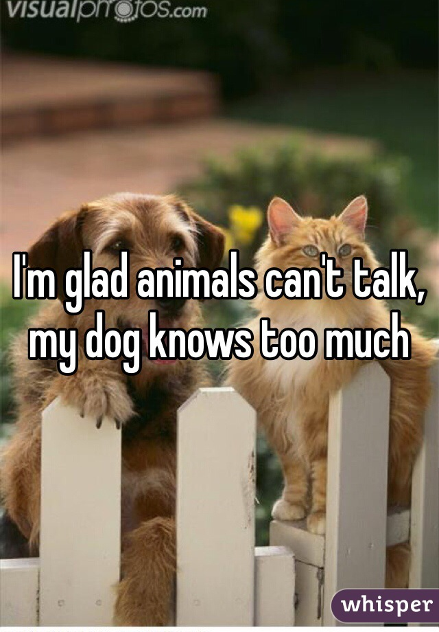 I'm glad animals can't talk, my dog knows too much