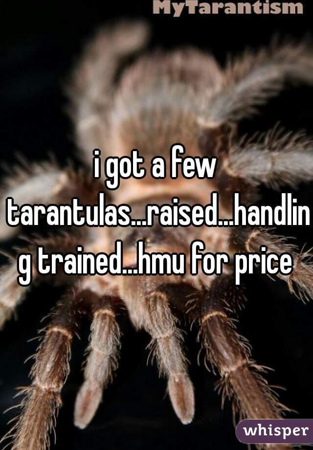 i got a few tarantulas...raised...handling trained...hmu for price