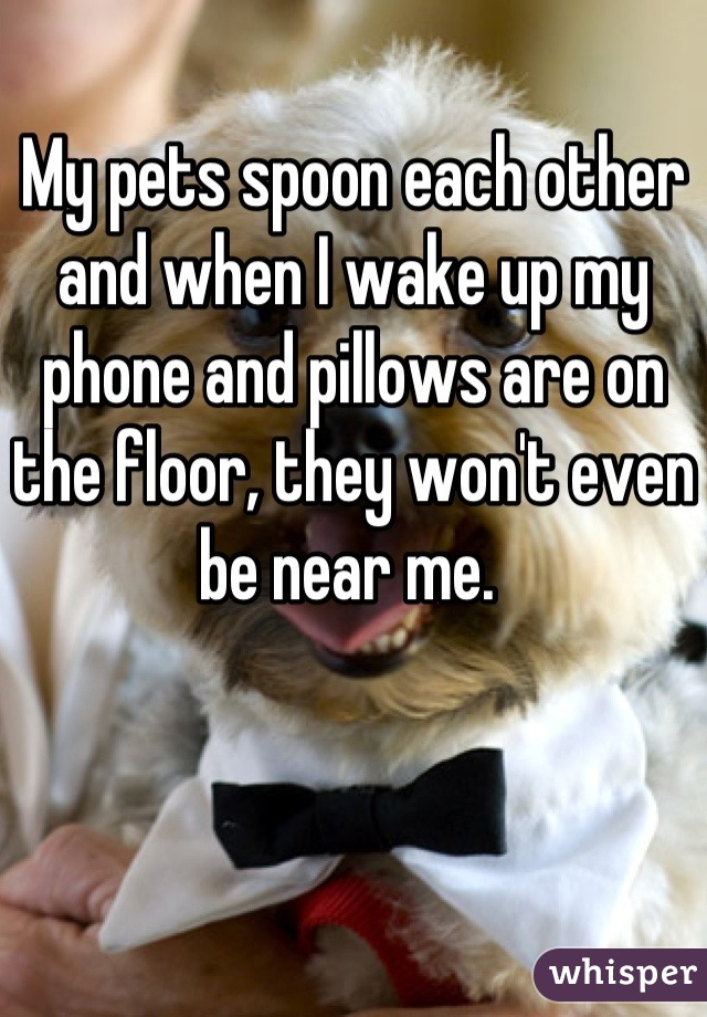 My pets spoon each other and when I wake up my phone and pillows are on the floor, they won't even be near me.