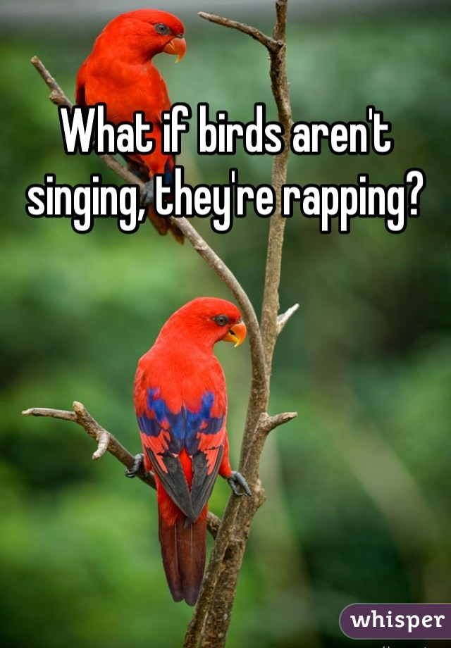 What if birds aren't singing, they're rapping?