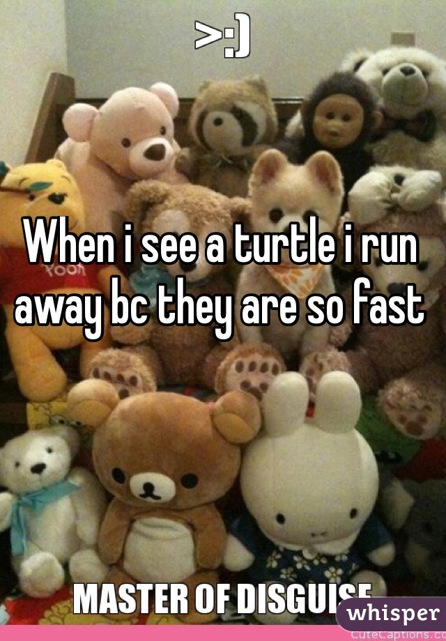 When i see a turtle i run away bc they are so fast