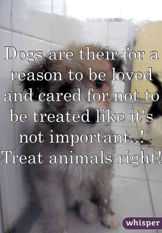 Dogs are their for a reason to be loved and cared for not to be treated like it's not important..! Treat animals right!