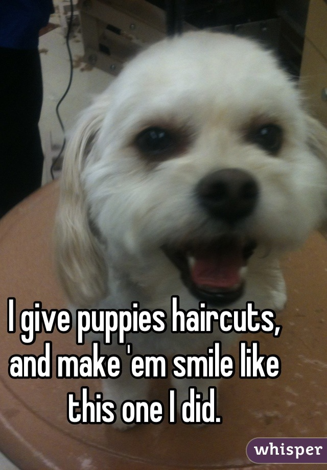 I give puppies haircuts, and make 'em smile like this one I did.