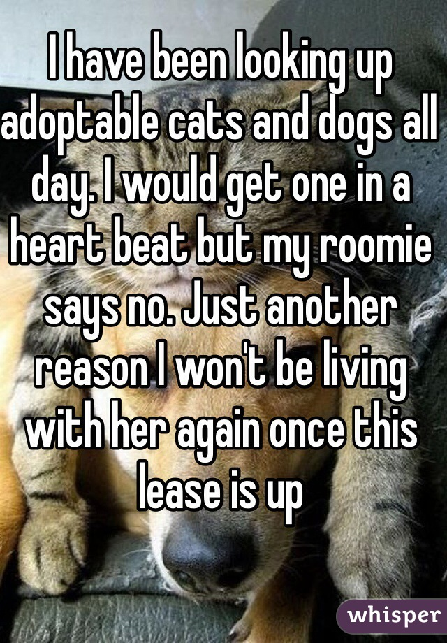 I have been looking up adoptable cats and dogs all day. I would get one in a heart beat but my roomie says no. Just another reason I won't be living with her again once this lease is up