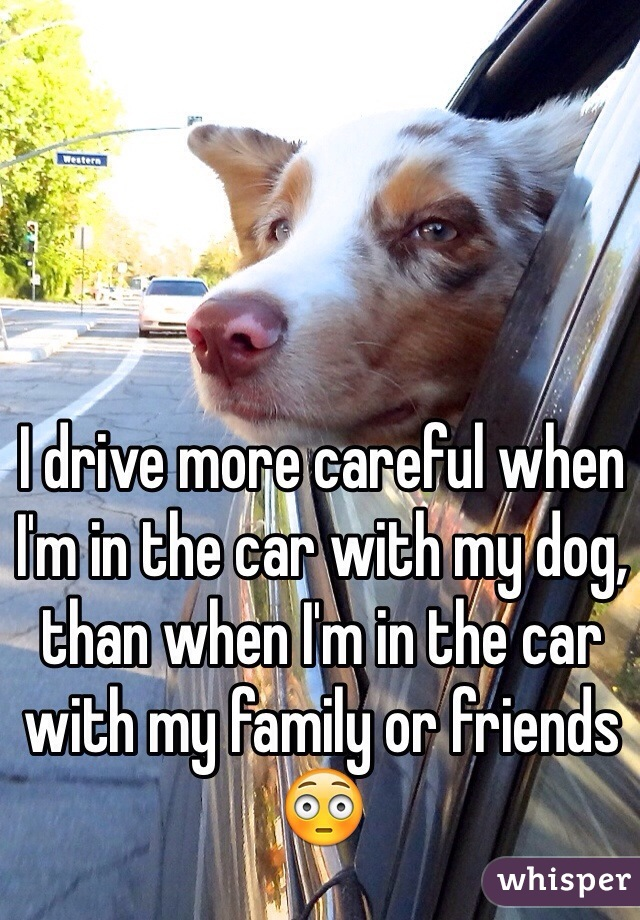 I drive more careful when I'm in the car with my dog, than when I'm in the car with my family or friends 😳