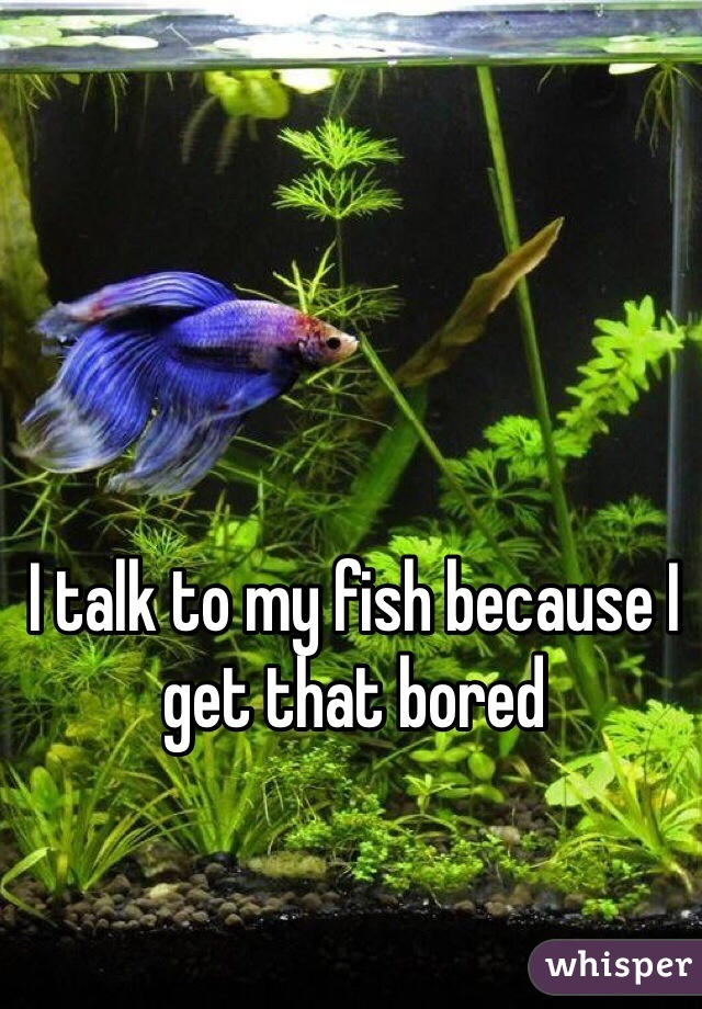 I talk to my fish because I get that bored