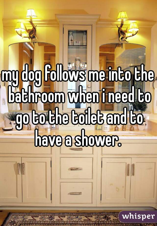 my dog follows me into the bathroom when i need to go to the toilet and to have a shower.
