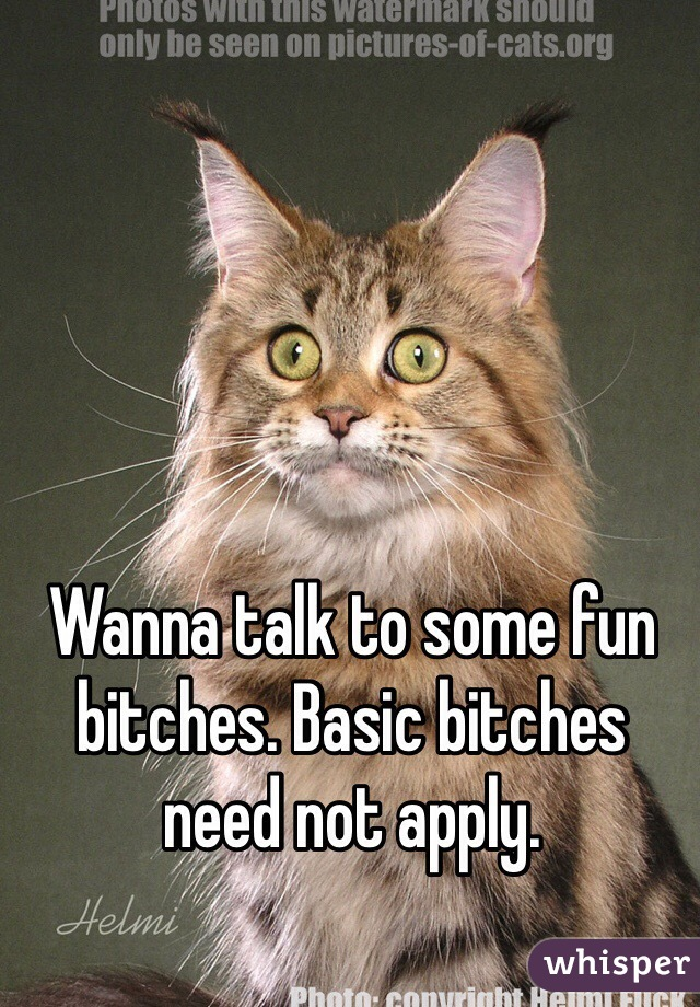 Wanna talk to some fun bitches. Basic bitches need not apply.