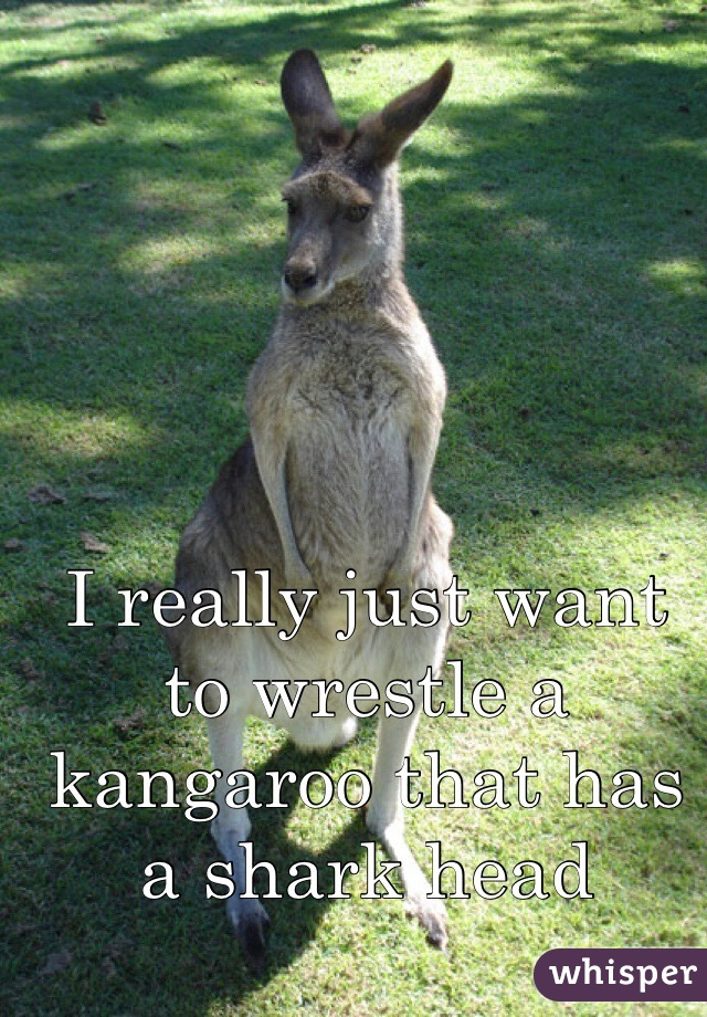I really just want to wrestle a kangaroo that has a shark head