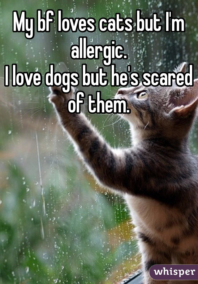 My bf loves cats but I'm allergic.  I love dogs but he's scared of them.