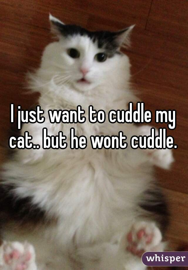 I just want to cuddle my cat.. but he wont cuddle.