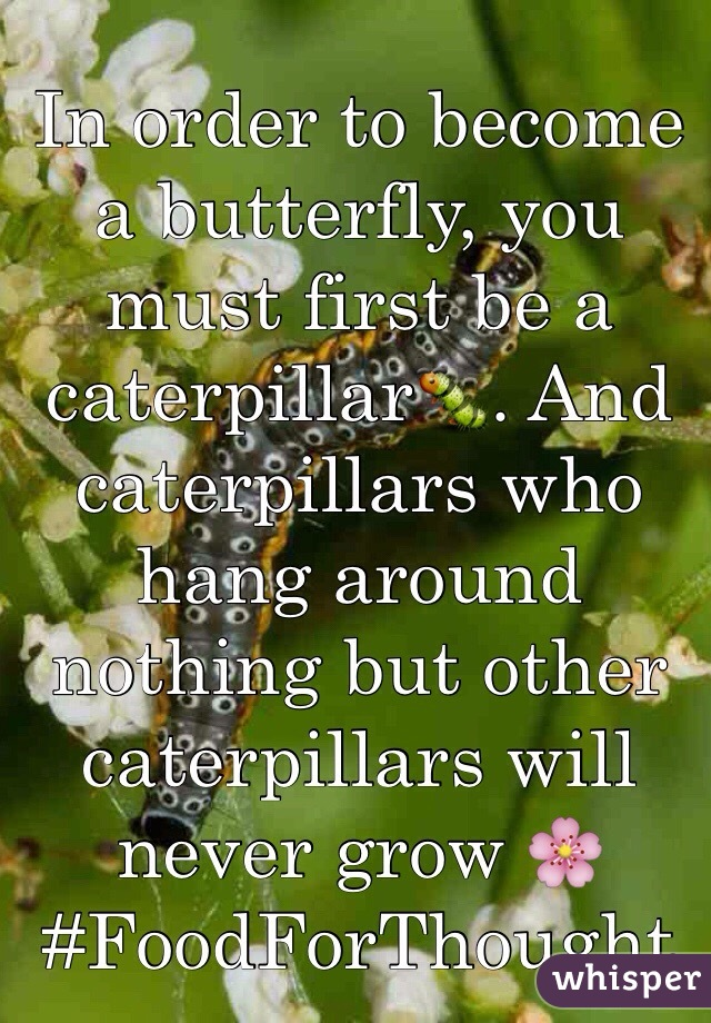 In order to become a butterfly, you must first be a caterpillar🐛. And caterpillars who hang around nothing but other caterpillars will never grow 🌸 #FoodForThought