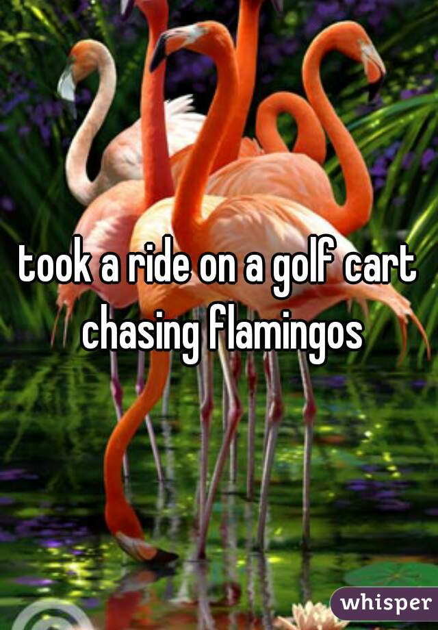 took a ride on a golf cart chasing flamingos