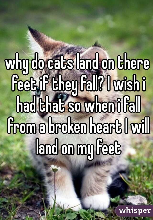why do cats land on there feet if they fall? I wish i had that so when i fall from a broken heart I will land on my feet